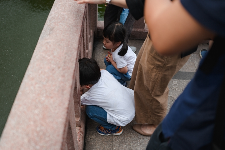 children viewing Koi in the Old City